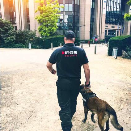 agent de sécurité maitre chien à bruxelles
